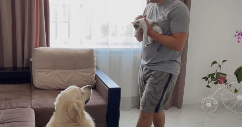 cucciolo di gatto incontra un amico