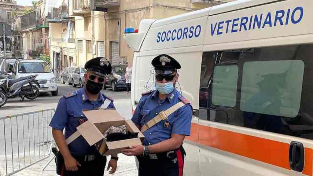 carabinieri con gattino