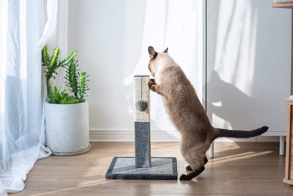 gattino usa il tiragraffi