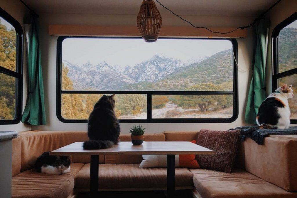 due grossi gatti in un camper