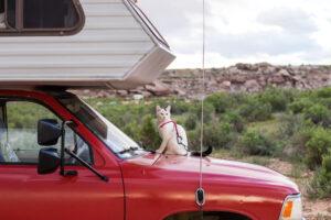 gatto sul cofano di un camper