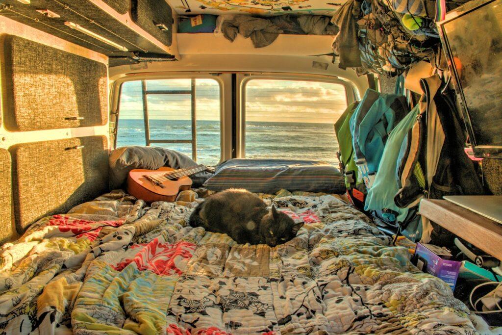gatto sul letto di un camper