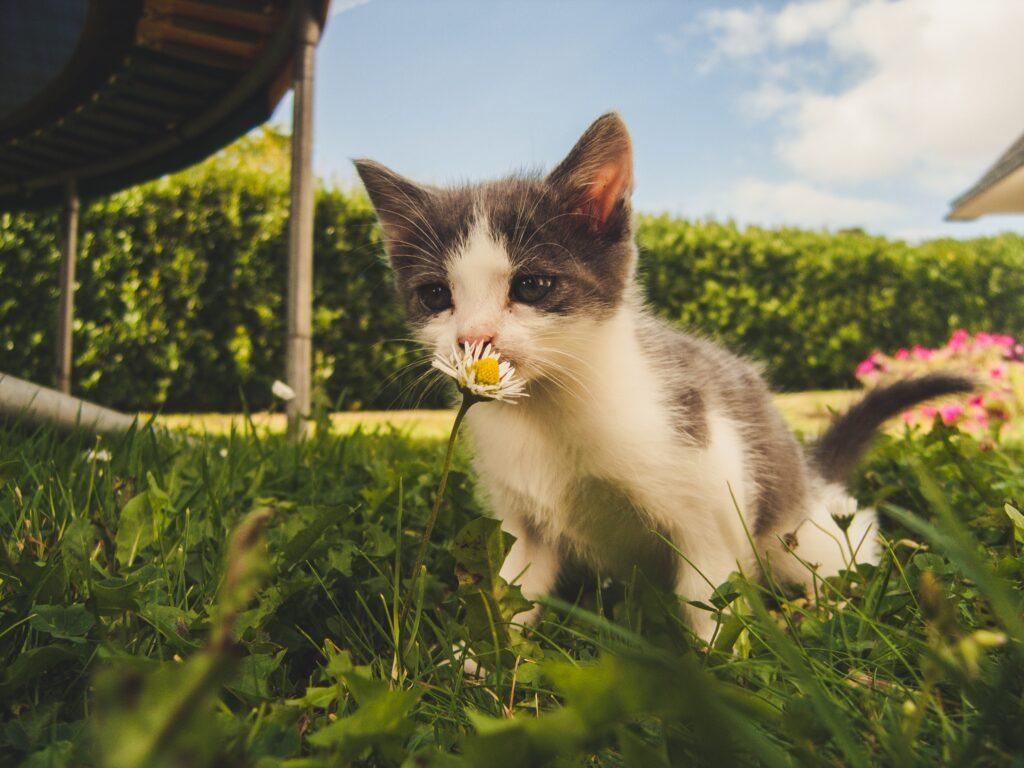 gattino in montagna