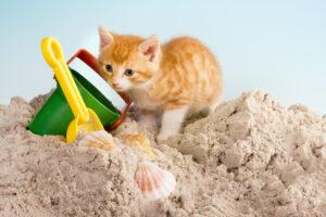 gattino gioca sulla sabbia