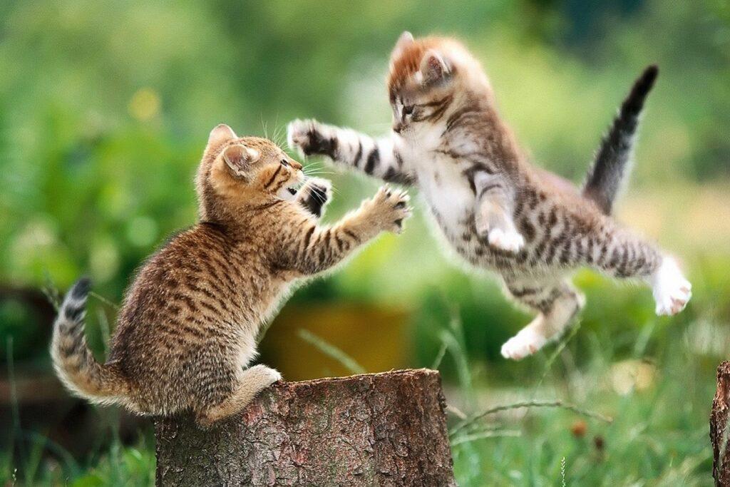 cuccioli di gatto in giardino