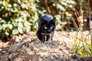 cucciolo di gatto nero