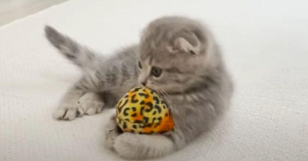 gatto con una pallina