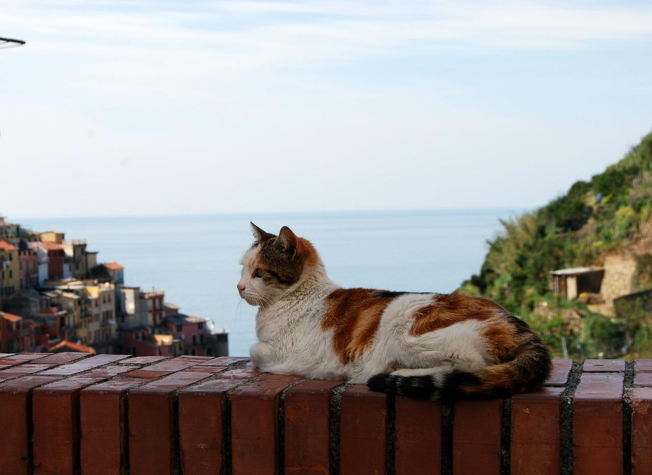 gatto si rilassa in vacanza
