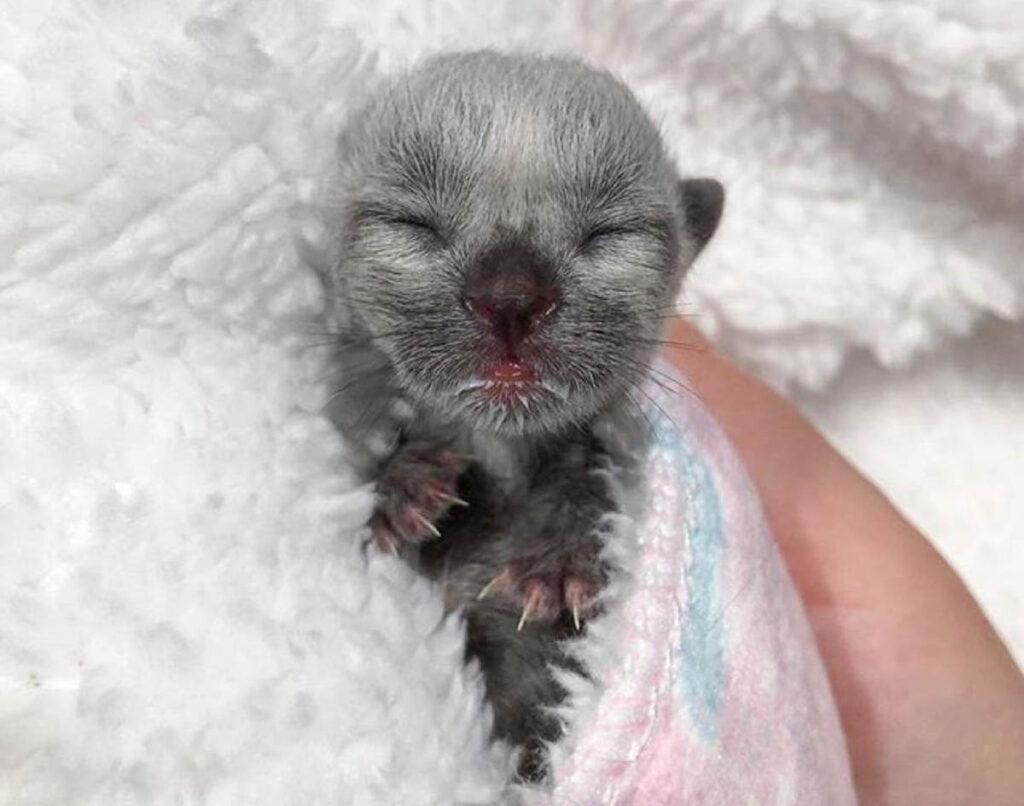 gattino minuscolo