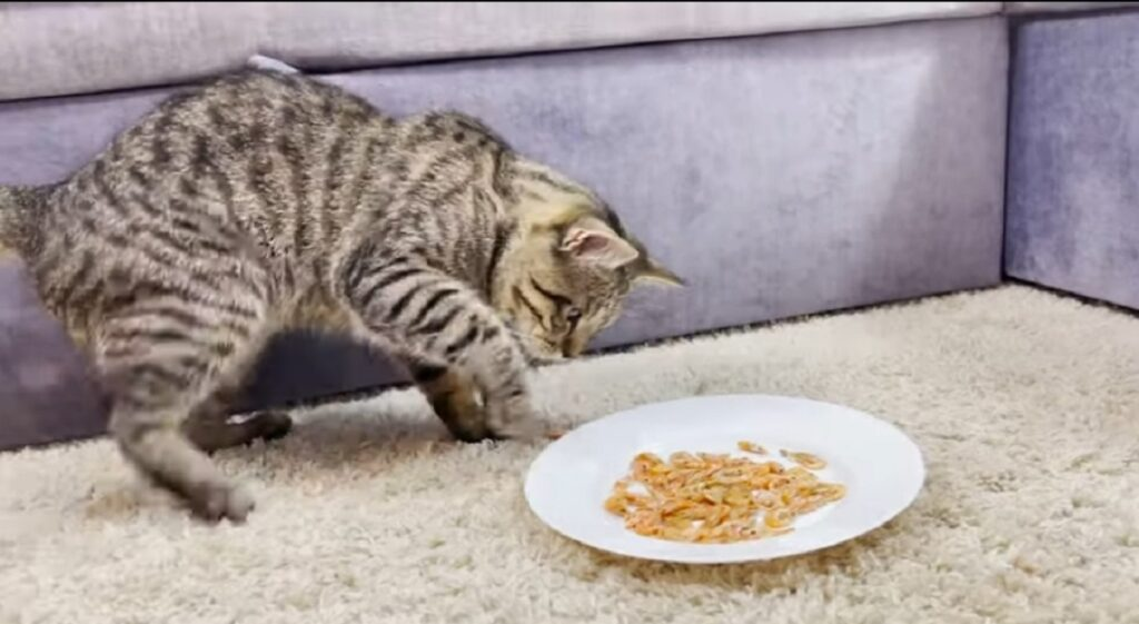 gatto mangia gamberetti