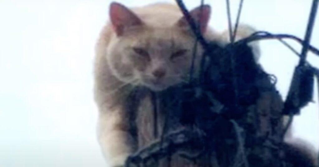 gatto bloccato su un traliccio
