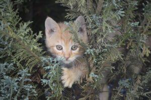 gatto rosso fra i rami