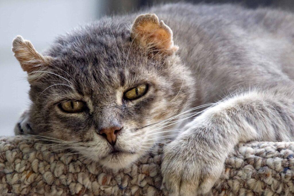 gatto mogio