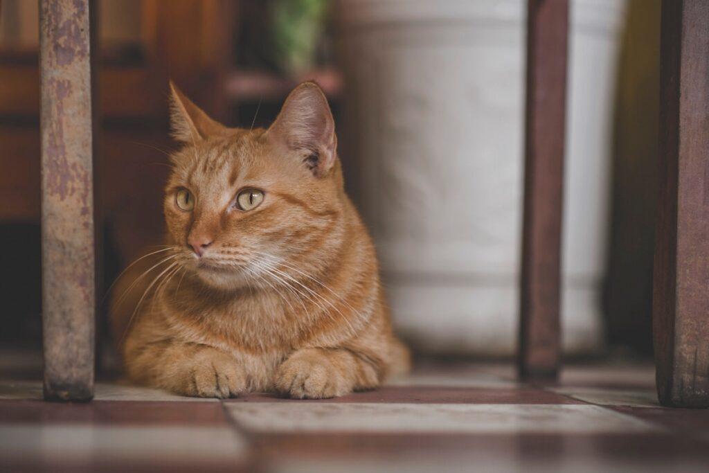 gatto per terra