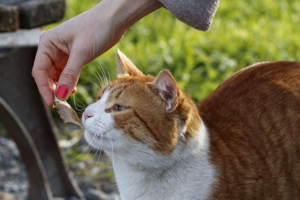 gatto fa uno spuntino
