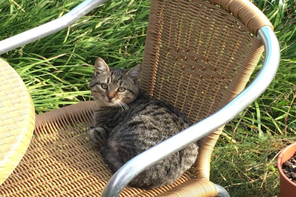 gatto in campagna