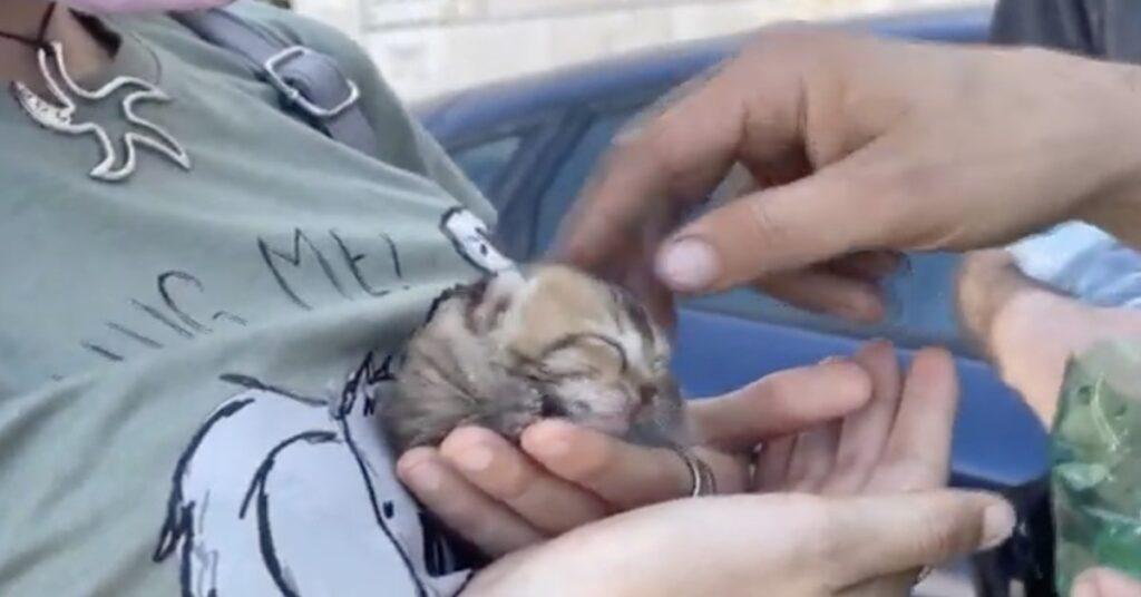 gattino salvato a Bari