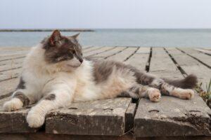 gatto bianco e grigio al mare