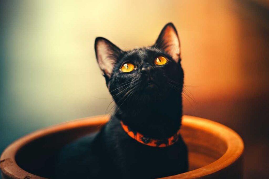 gatto in un vaso