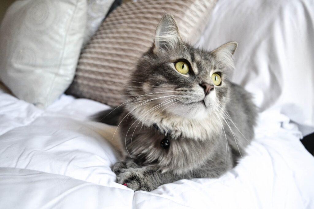 gatto su letto