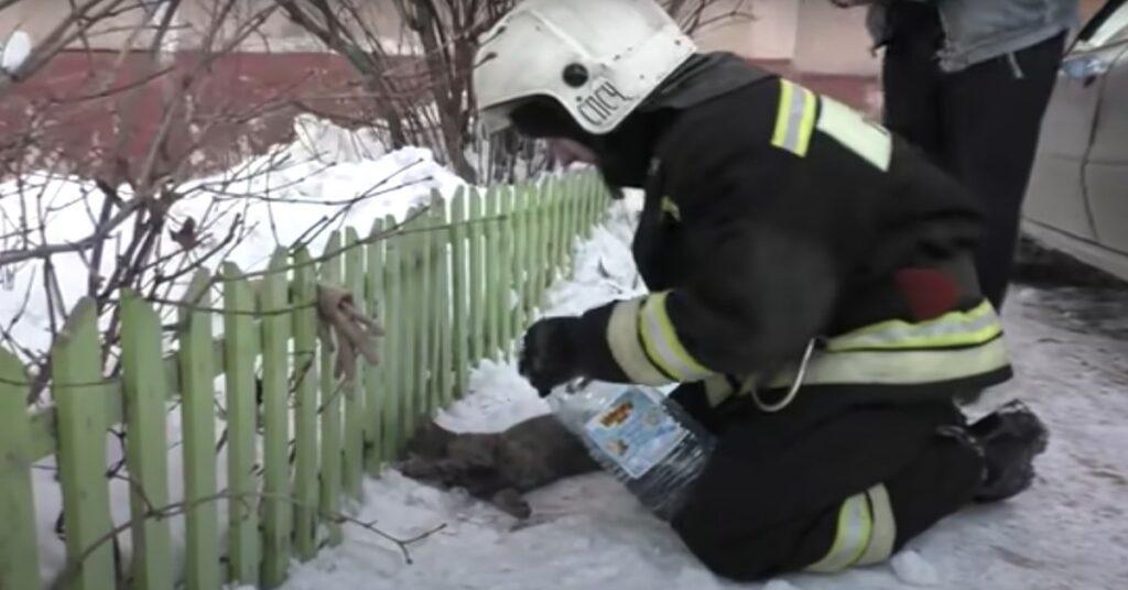pompiere salva gatto che sta morendo di freddo