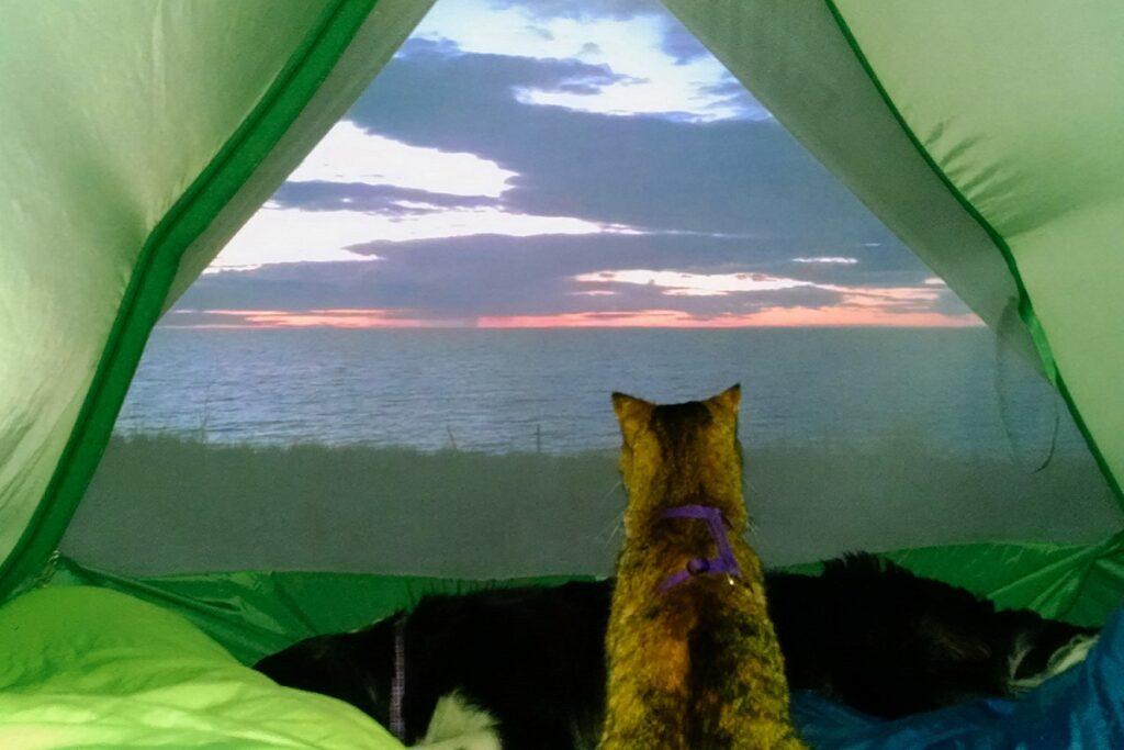 gattino in campeggio