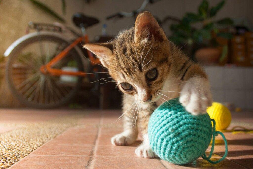 gattino gioca con pallina
