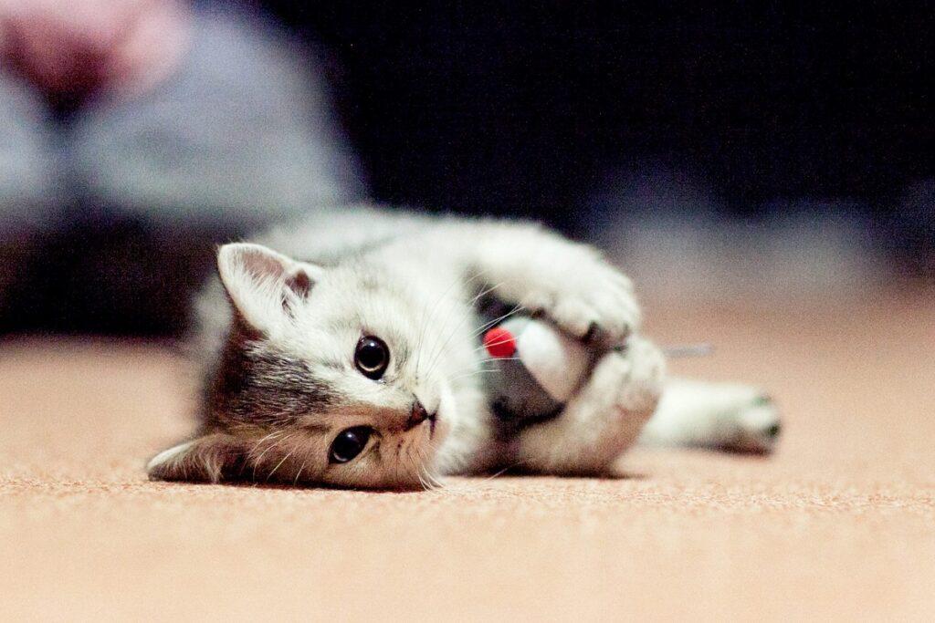 gattino sdraiato per terra