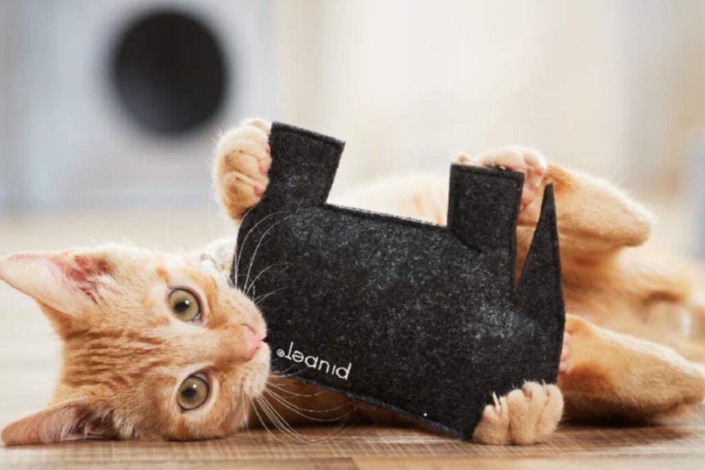 gatto gioca con pupazzo di pezza