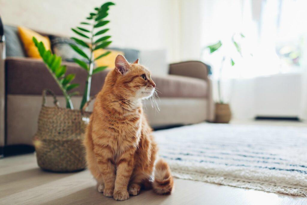 gatto in salone