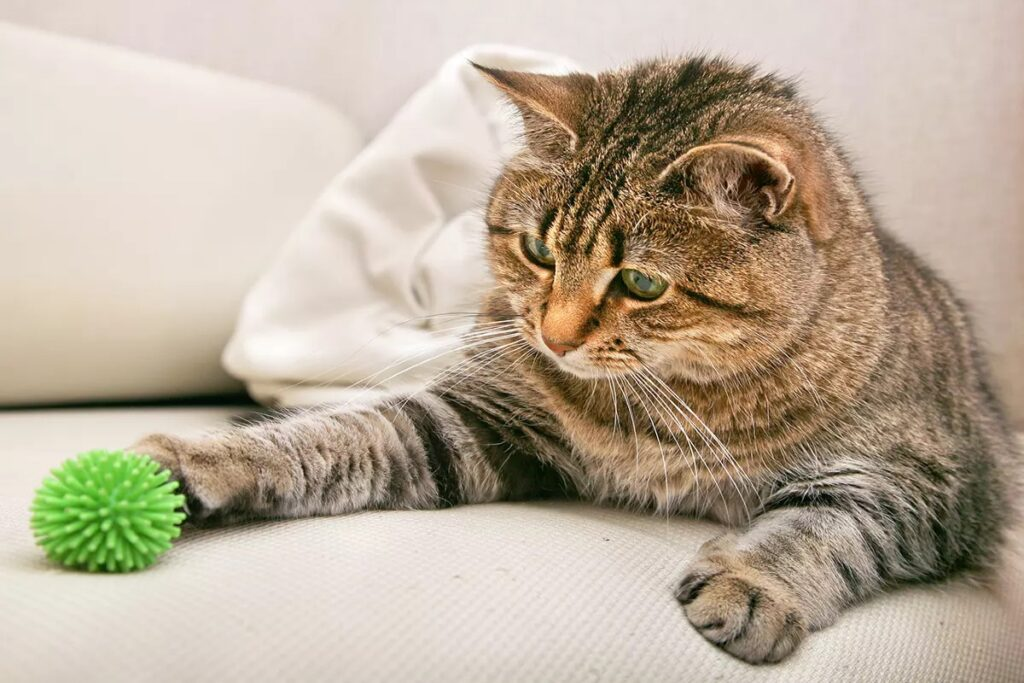 gatto giocherellone