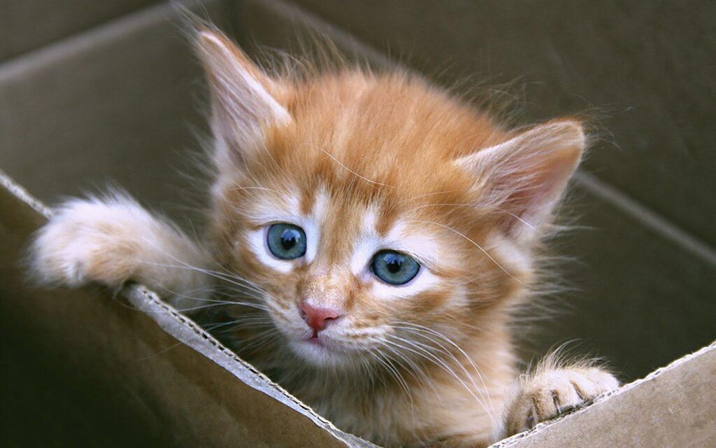 gattino nella scatola
