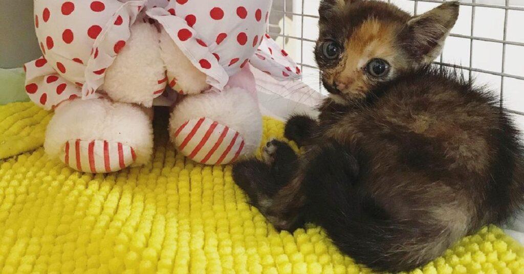 gattina piccola sopra una coperta