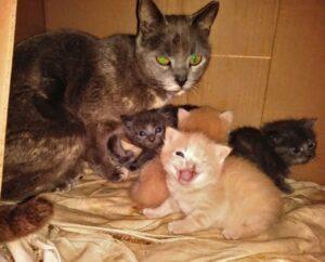 gattini con la mamma