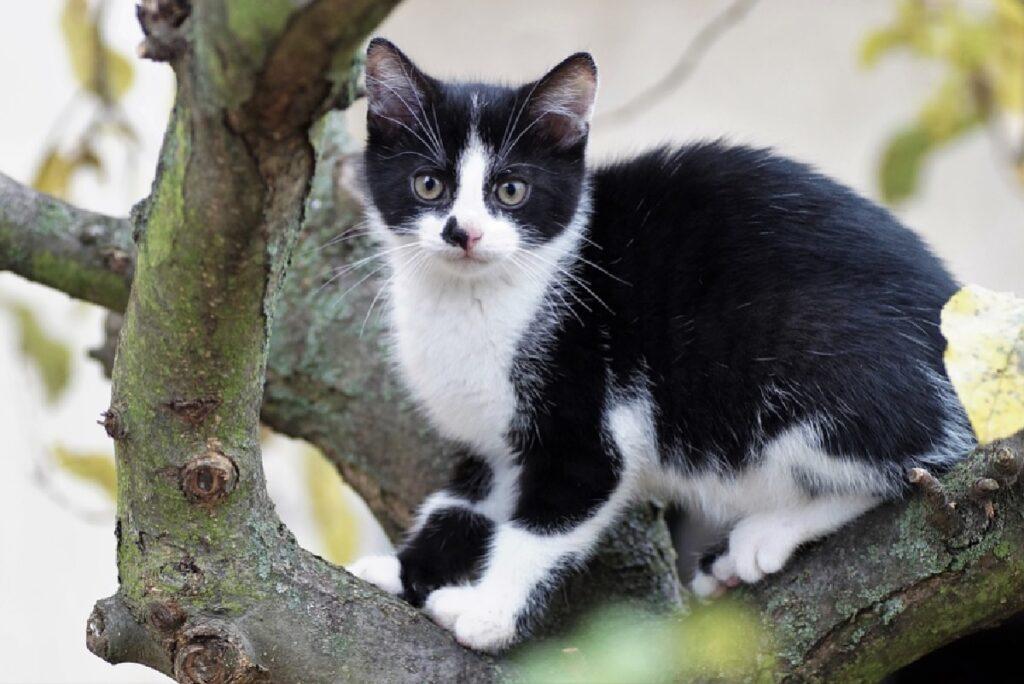 gatto bianco nero su ramo albero