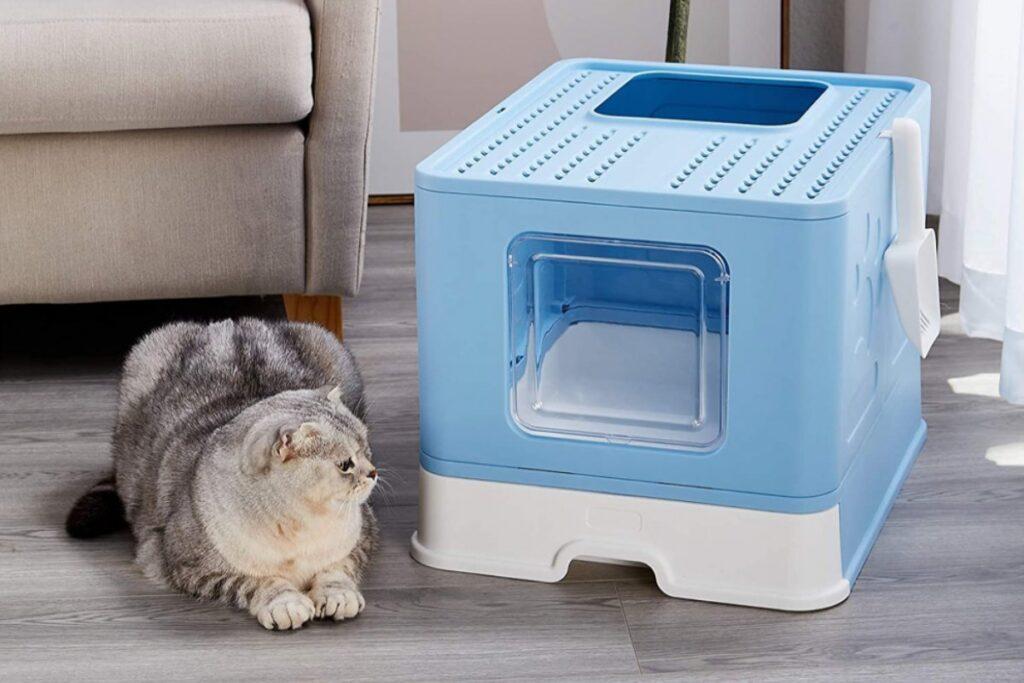 gatto con lettiera blu