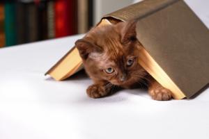 gatto coperto da libro