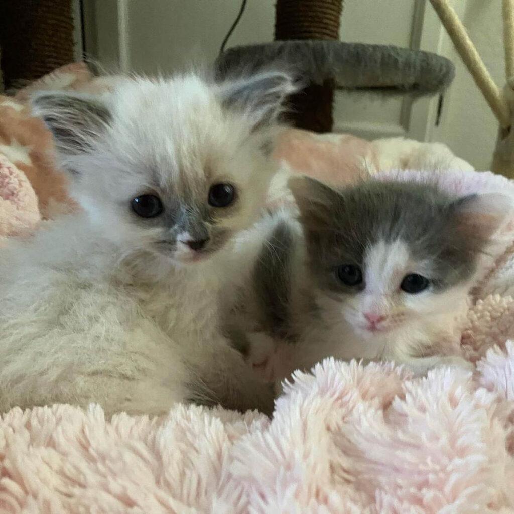 gattine accoccolate