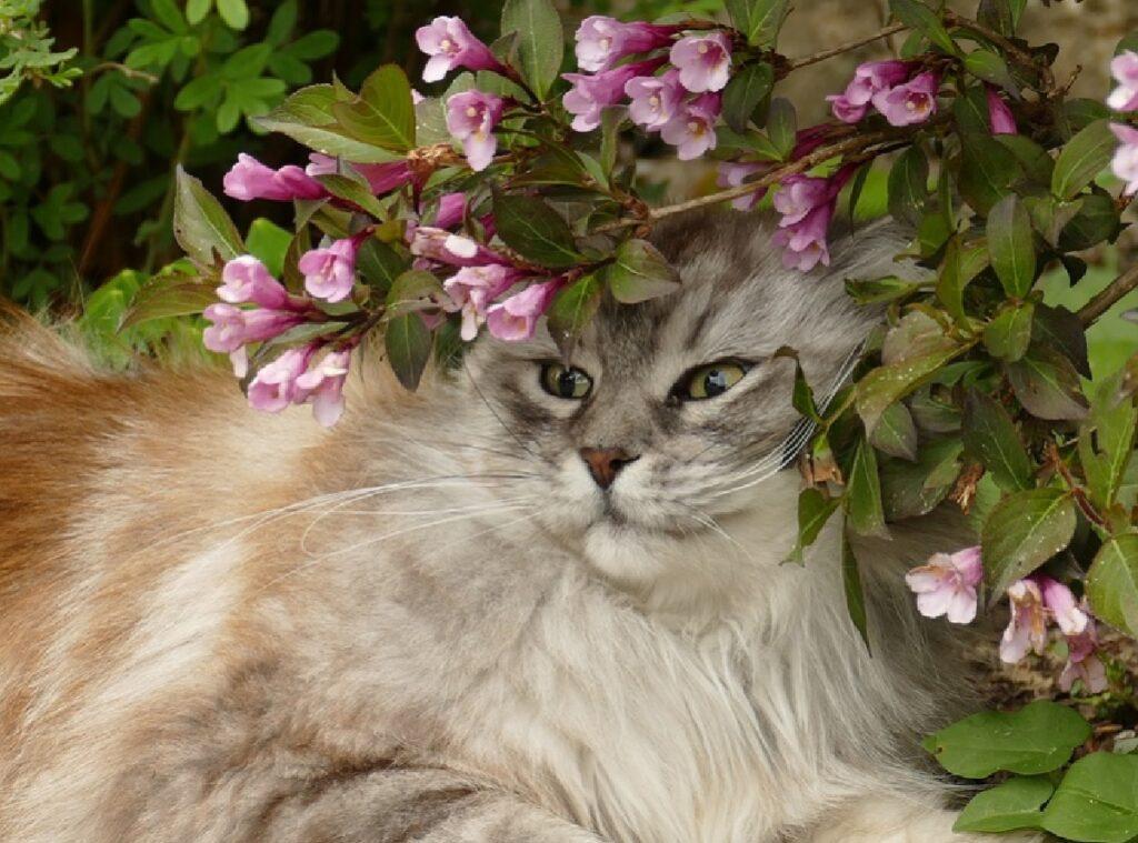 gatto merlino sotto albero