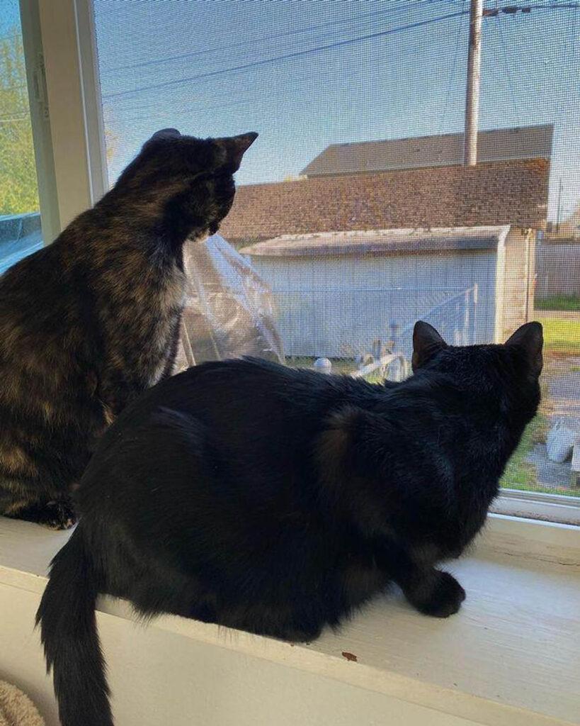 due gatti sul davanzale