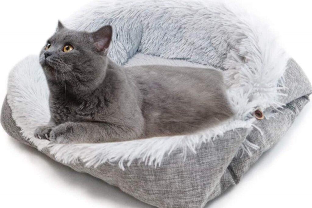 gatto nella sua cuccia