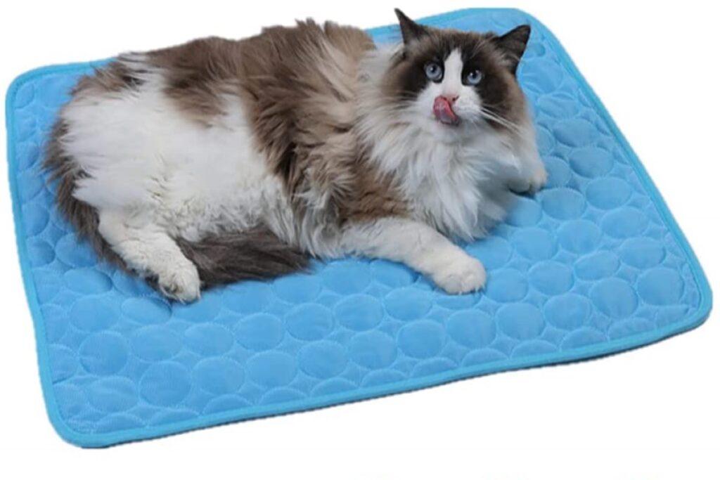 gatto su tappetino