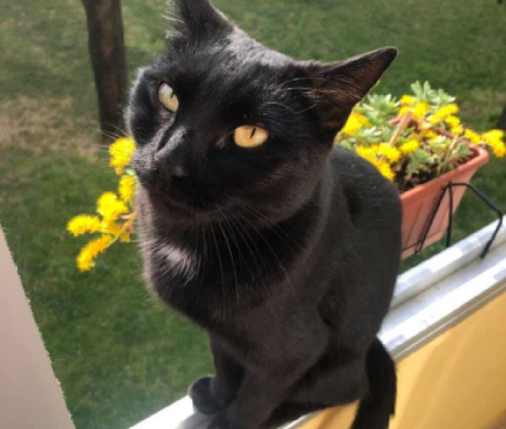 gattino nero osserva in alto