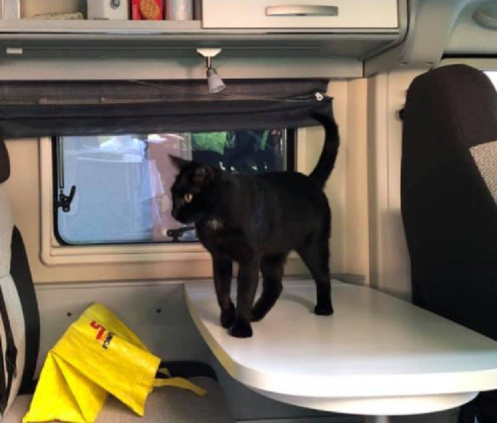 gatto nero dentro camper