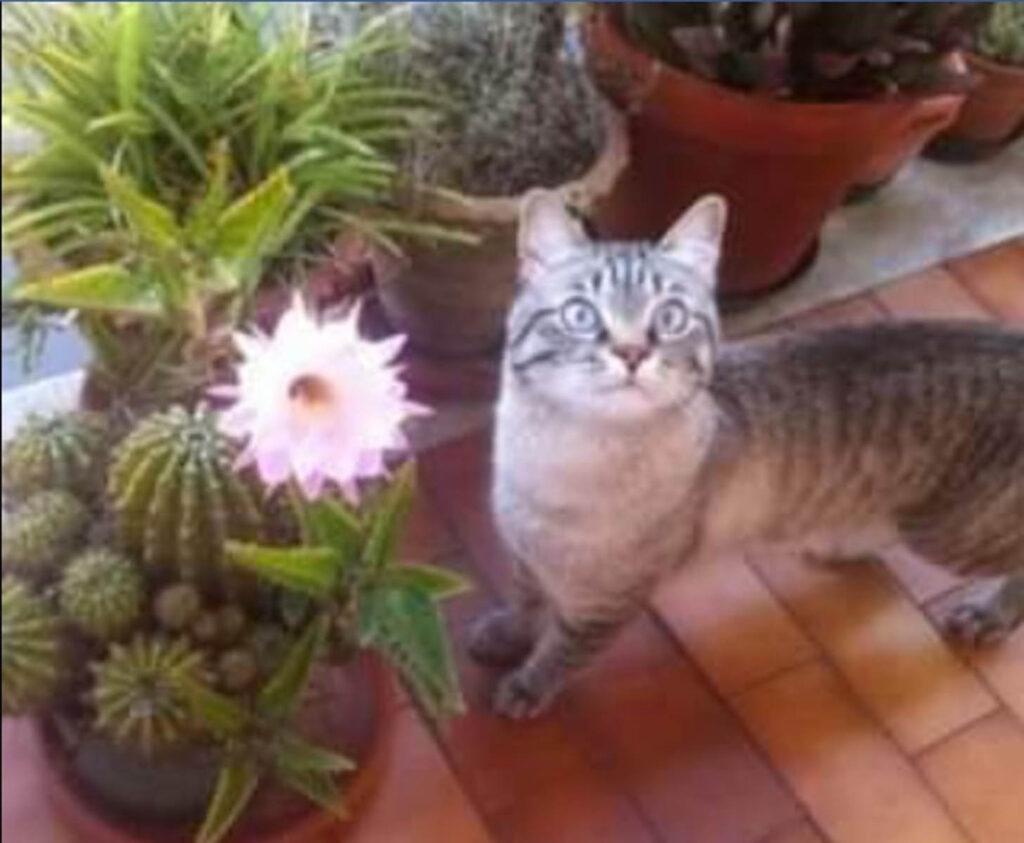 Orfeo gatto con cancro