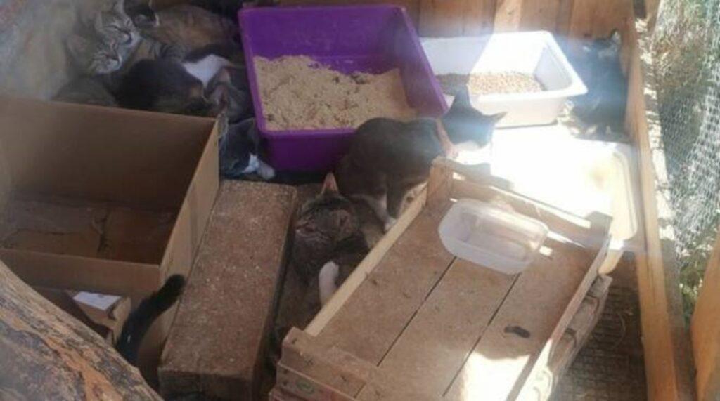 gatti tra la sporcizia