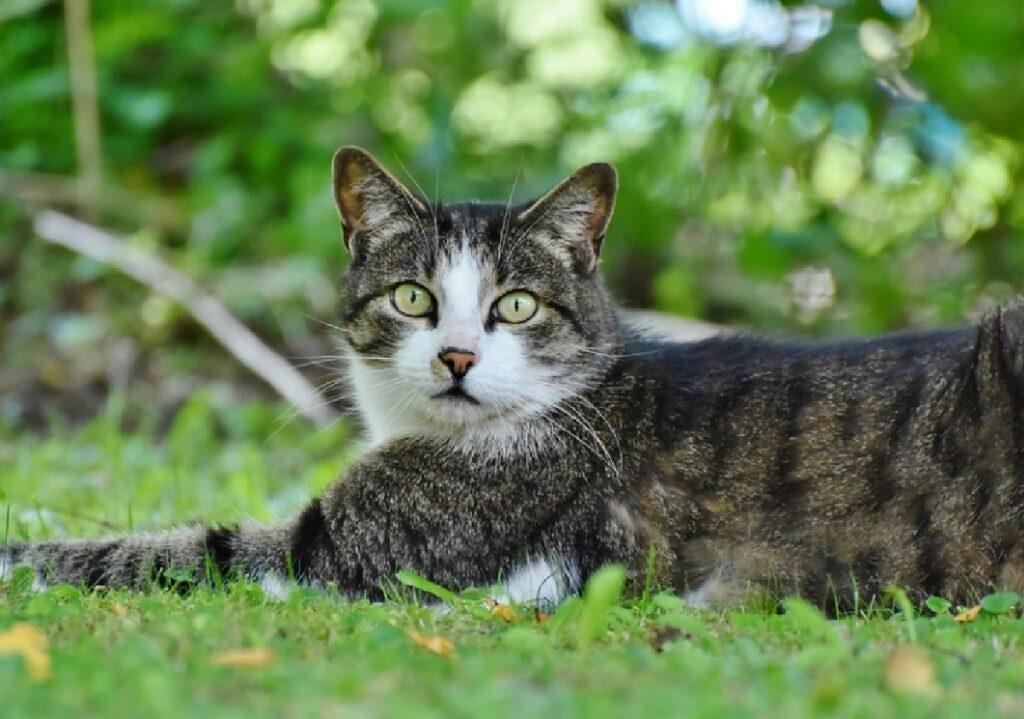 gatto occhi spalancati verde