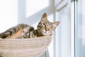 gatto nella cesta