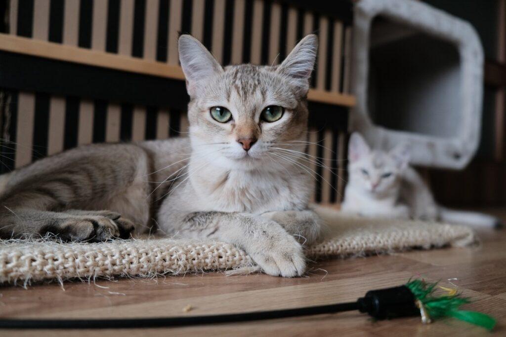 gattini in relax