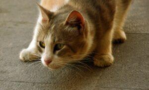 roma gatta scompare nel nulla